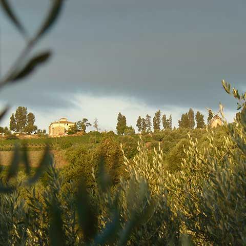 Toscana Lansdchaft Tai Chi Ferienkurs